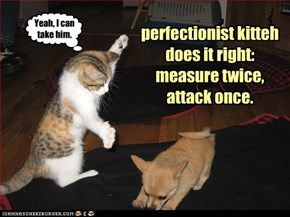 perfectionist kitteh does it right: measure twice, attack once.