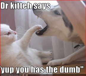 "Dr kitteh says  ""yup you has the dumb"""