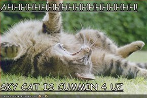 AHHHHHHHHHHHHHHHHHHH!  SKY CAT IS CUMMIN 4 UZ