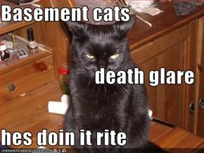 Basement cats  death glare hes doin it rite