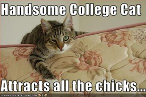 Handsome College Cat  Attracts all the chicks...