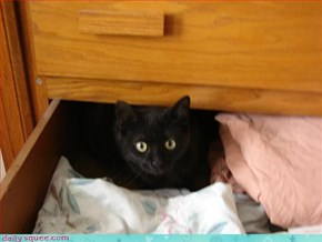 Drawer Kitteh