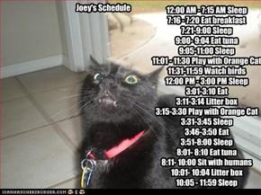 Joey's Schedule