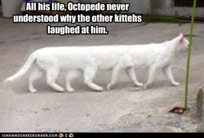 All his life, Octopede never understood why the other kittehs laughed at him.