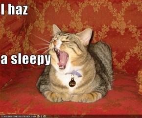 I haz  a sleepy