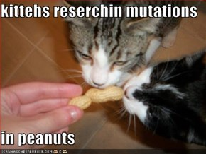 kittehs reserchin mutations   in peanuts