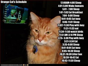 Orange Cat's Schedule