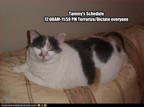 Tammy's Schedule