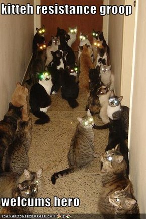 kitteh resistance groop  welcums hero