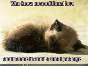 Who knew unconditional love  could come in such a small package