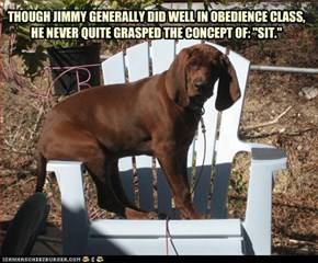 "THOUGH JIMMY GENERALLY DID WELL IN OBEDIENCE CLASS,  HE NEVER QUITE GRASPED THE CONCEPT OF: ""SIT."""