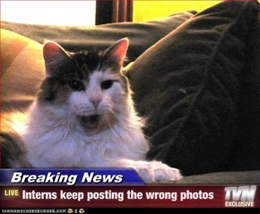 Breaking News - Interns keep posting the wrong photos