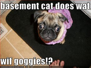 basement cat does wat  wif goggies!?