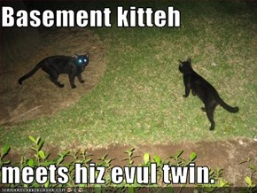 Basement kitteh  meets hiz evul twin.