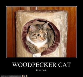 WOODPECKER CAT