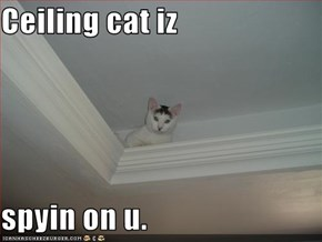 Ceiling cat iz  spyin on u.