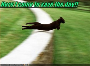 Here I come to save the day!!