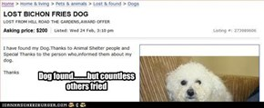 Dog found.........but countless others fried