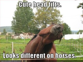 Cute head tilts.  Looks different on horses.
