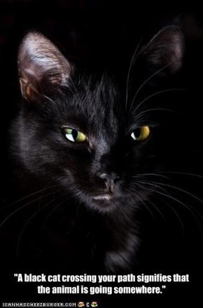 """A black cat crossing your path signifies that the animal is going somewhere."""