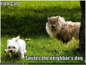 Lion Cat  Smites the neighbor's dog