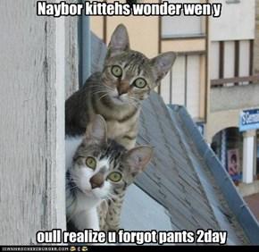 Naybor kittehs wonder wen y