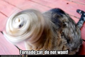 Tornado cat  do not want!