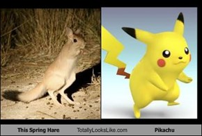 This Spring Hare Totally Looks Like Pikachu