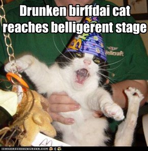Drunken birffdai cat reaches belligerent stage