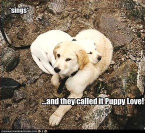 ...and they called it Puppy Love