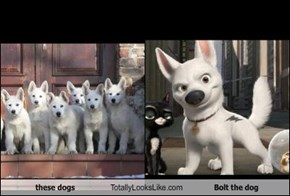 these dogs Totally Looks Like Bolt the dog