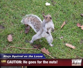 Ninja Squirrel on the Loose - CAUTION: He goes for the nuts!