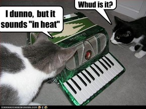 """Whud is it? I dunno, but it sounds """"in heat"""""""