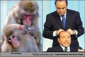 Two monkeys Totally Looks Like Papi Berlusconi and Bruno Vespa