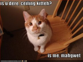 is u dere, ceiling kitteh?  is me, mahgwet
