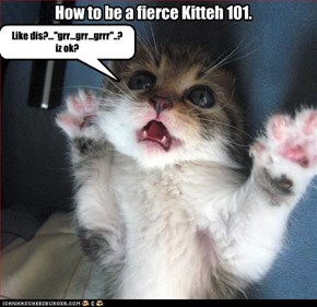How to be a fierce Kitteh 101.