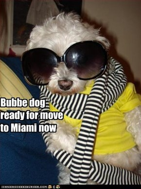 Bubbe dog ready for move to Miami now