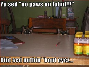 "Yu sed ""no paws on tabul!!!""  Dint sed nuthin' 'bout eyez..."