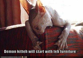Demon kitteh will start with teh furniture