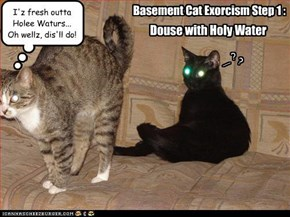 Basement Cat Exorcism Step 1 :