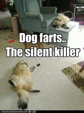 Dog farts..  The silent killer
