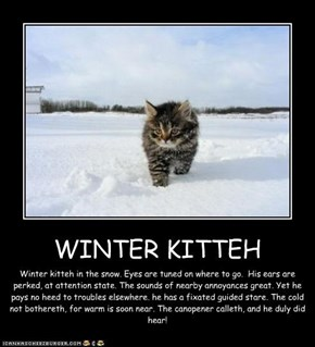 WINTER KITTEH