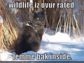wildlife iz ovur rated.     lemme bak inside.