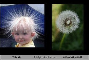 This Kid Totally Looks Like A Dandelion Puff