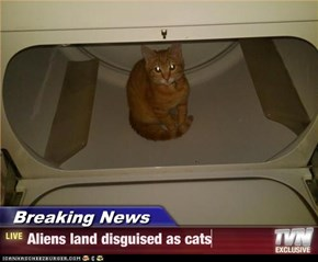 Breaking News - Aliens land disguised as cats