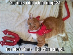 Yu tinks i did a bad ting???  Jus look at me.   Iz just an angel.