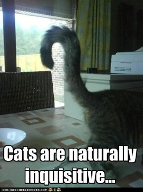 Cats are naturally inquisitive...