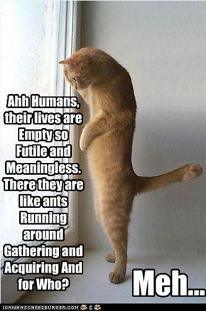 Ahh Humans, their lives are Empty so Futile and Meaningless. There they are like ants Running around Gathering and Acquiring And for Who?