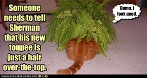 Someone needs to tell Sherman  that his new toupee is  just a hair  over-the-top.