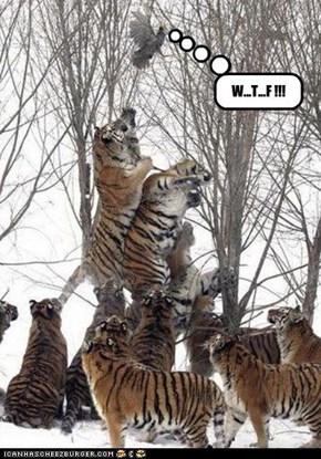 W...T...F !!!